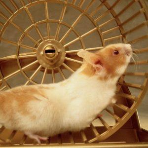 VÁLTS ÉLETET! –avagy mi a tennivaló, amikor a mókuskerék megáll